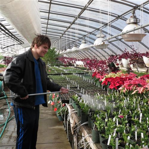 Student watering plants in greehouse